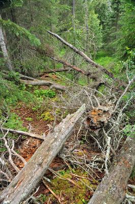 071512-15_Russian_river_trail.jpg