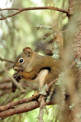 071512-23_squirrel.jpg