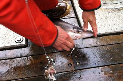 Hulibut_fishing_091912-03.jpg