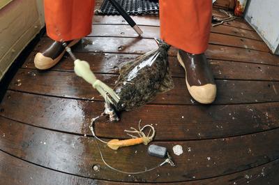 Hulibut_fishing_091912-05.jpg