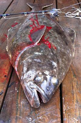 Hulibut_fishing_091912-07.jpg