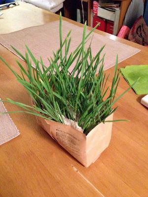 catgrass_062613-01.jpg