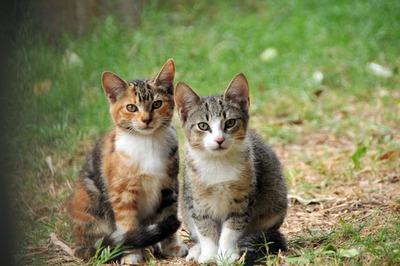 kittens_010113-02.jpg