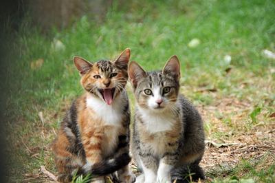 kittens_010113-03.jpg
