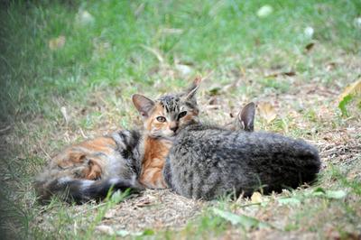 kittens_010113-04.jpg