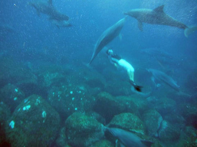mikura_dolphin_swim_03.jpg