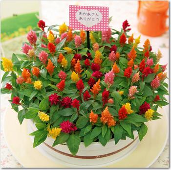 mothers_day_flower_cake_01.jpg